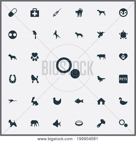 Elements Safari, Circle, Ornitology And Other Synonyms Ornithology, Belt And Hare.  Vector Illustration Set Of Simple Zoo Icons.