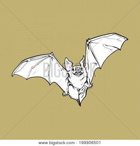 Scary flying Halloween vampire bat, sketch style vector illustration isolated on background. Hand drawn, sketch style vampire bat flying with wide spread wings, Halloween object