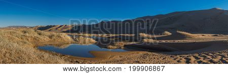beautiful evening landscape of desert with little oasis