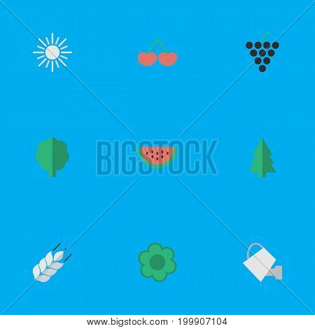 Elements Tree, Flower, Bailer And Other Synonyms Watering, Sun And Grape.  Vector Illustration Set Of Simple Gardening Icons.
