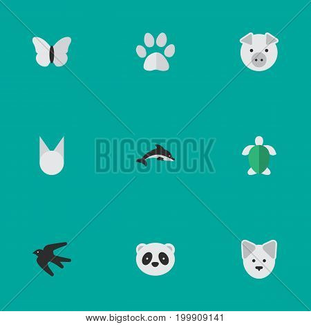 Elements Foot, Moth, Cat And Other Synonyms Pig, Piggy And Dolphin.  Vector Illustration Set Of Simple Wild Icons.