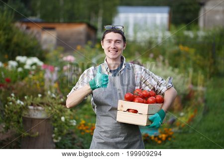 Cheerful brunette with box of tomato holds thumb up