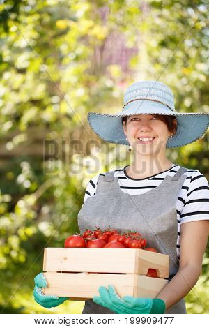 Photo of brunette in hat with box of tomato in garden