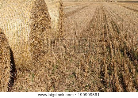 straw bales on the ground amid wheat fields.