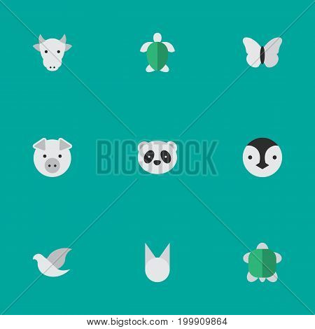 Elements Bear, Flightless Bird, Tortoise And Other Synonyms Milk, Tortoiseshell And Piggy.  Vector Illustration Set Of Simple Fauna Icons.