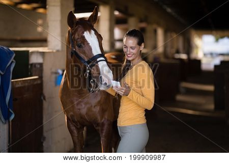 Female jockey using smart phone while standing by horse in stable