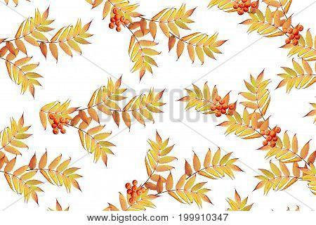 Bright colorful autumn foliage isolated on white background