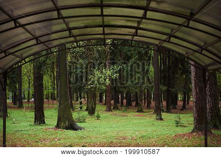 Forest mystic way, Primorye, Russia . A canopy made of polycarbonate
