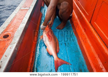 Fresh Red Fish With Fishermen On The Fishing Boat