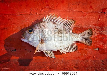 Fresh Fish On The Red Wooden Floor