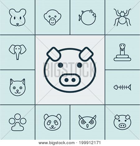 Zoology Icons Set. Collection Of Spider, Bear, Kitten And Other Elements