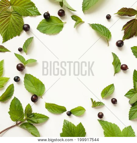 Composition With Fresh Mint Leaves And Blackcurrant