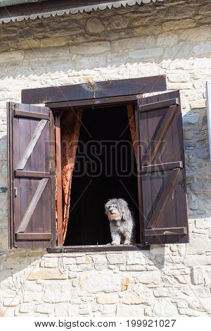 Dog with sad eyes looking out from window