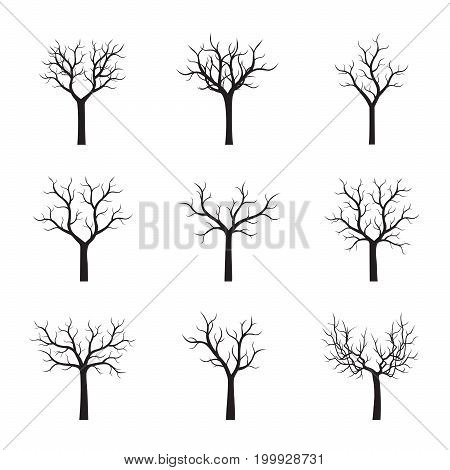 Set of naked Trees. Vector Illustration and graphic elements.