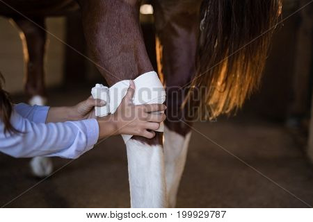 Cropped hands of female vet bandaging horse leg at stable