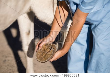 Midsection of female vet examining horse hoof at barn