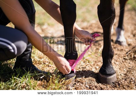Low section of woman trying fabric strap on horse leg while crouching at field