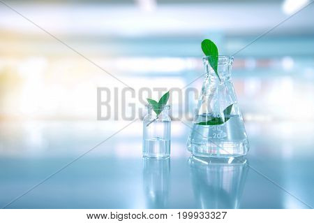 clear water in glass flask and vial with natural green leave in blue biotechnology science laboratory background
