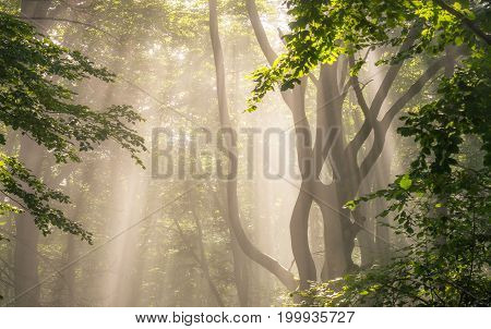 Morning sun rays in green forest .