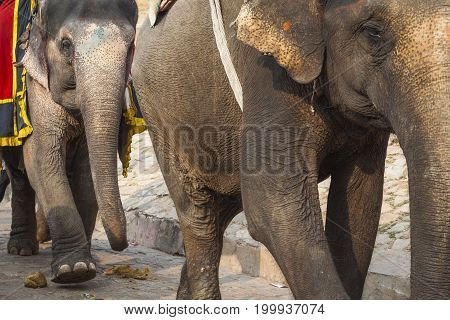 Decorated Elephants In Jaleb Chowk In Amber Fort In Jaipur, India. Elephant Rides Are Popular Touris