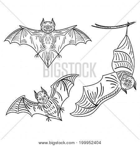 Set of bats. A collection of terrible bats for Halloween. Flying Monsters. The bloodsuckers. Black and white vector illustration.