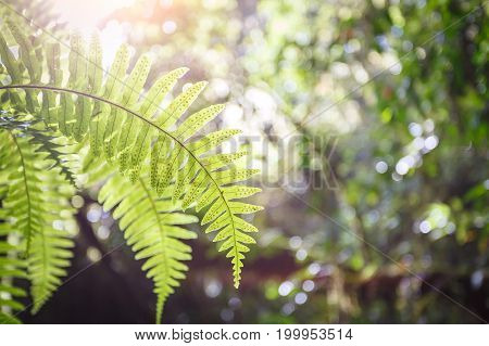 Beautiful green leaf at Ang Ka Nature Trail Doi Inthanon National Park Chom Thong Chiang Mai Thailand