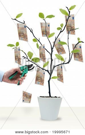 Cut The Money Tree
