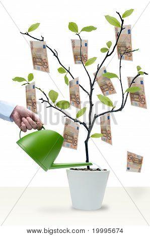 Water The Money Tree