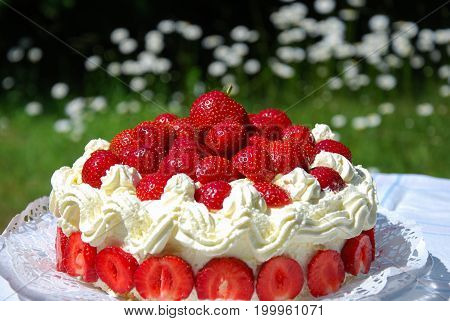 Closeup of a fresh strawberry cake outdoors in a garden with blossom daisies