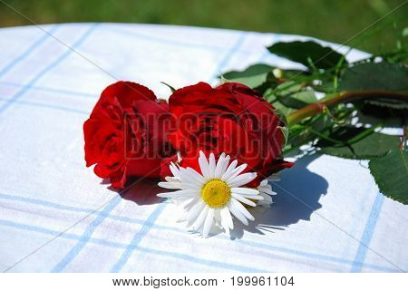 Red roses and daisies on a table outdoors