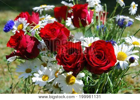 Red roses and white daisies in a colorful bouquet with summer flowers