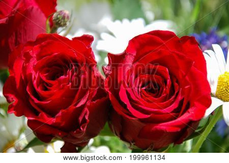 Detail of a bouquet with vibrant red roses