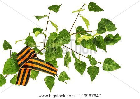 St. George ribbon on a birch branch with green leaves on a white background