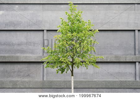 tree in front of concrete building, modern architecture versus nature