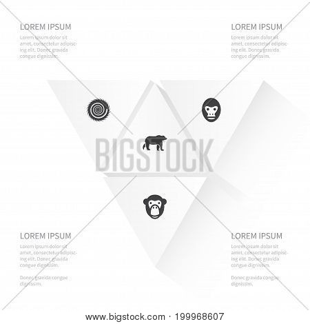 Icon Animal Set Of Wild, Baboon, Monkey And Other Vector Objects