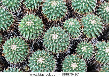 An image of a desert cactus - nature