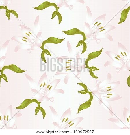 Seamless texture Lily white Lilium candidum a white flower with leaves vector illustration editable Hand drawn