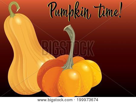 Two orange pumpkin on deep red background. Vector