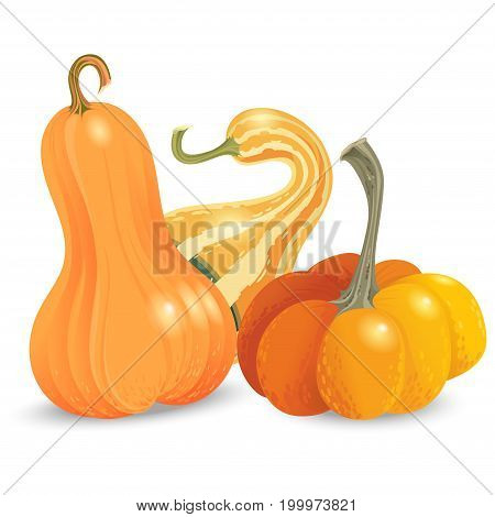 Three different pumpkin isolated on white background. Vector