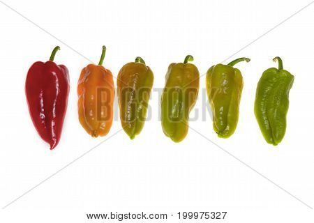 Decoration of the steps of green pepper vegetation isolated on white background