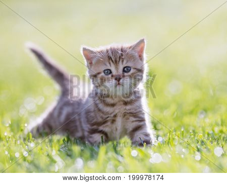 Funny young cat standing in green grass