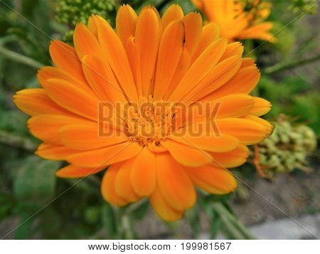 Here we can see orange bloom with nice center and many petals around it. All picture is only bloom but in corner there is background