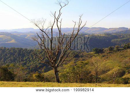 arvore frondosa e galhos secos ,vista de cima com montanhas