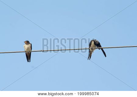 two swallows on electrical wire against cloudy sky