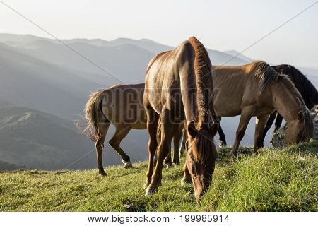 Horses are grazing on top of the mountain