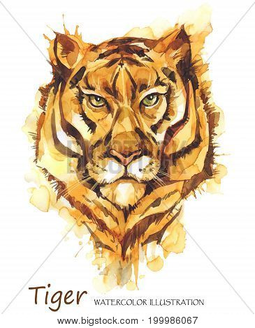 Watercolor tiger on the white background. African animal. Wildlife art illustration.