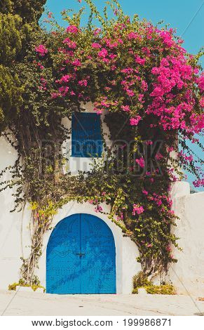 Colourful tropical purple bougainvillea creeper flowering over blue door on a whitewashed villa typical of Mediterranean architecture