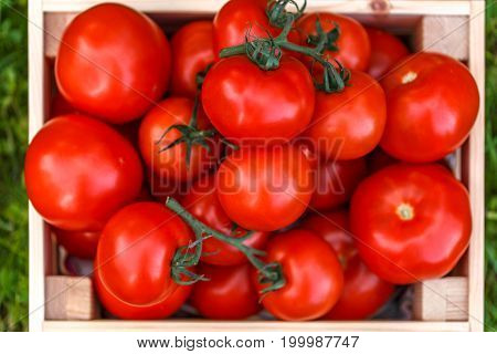 Image crop of fresh tomato close up