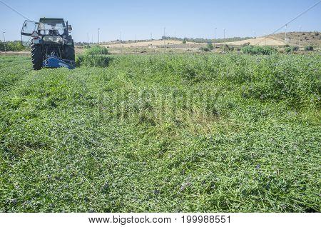 Tractor cutting and swathing alfalfa. Badajoz Spain