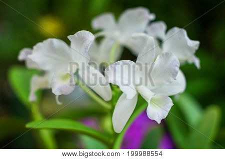 White orchid plant over natural background beautiful shape flower